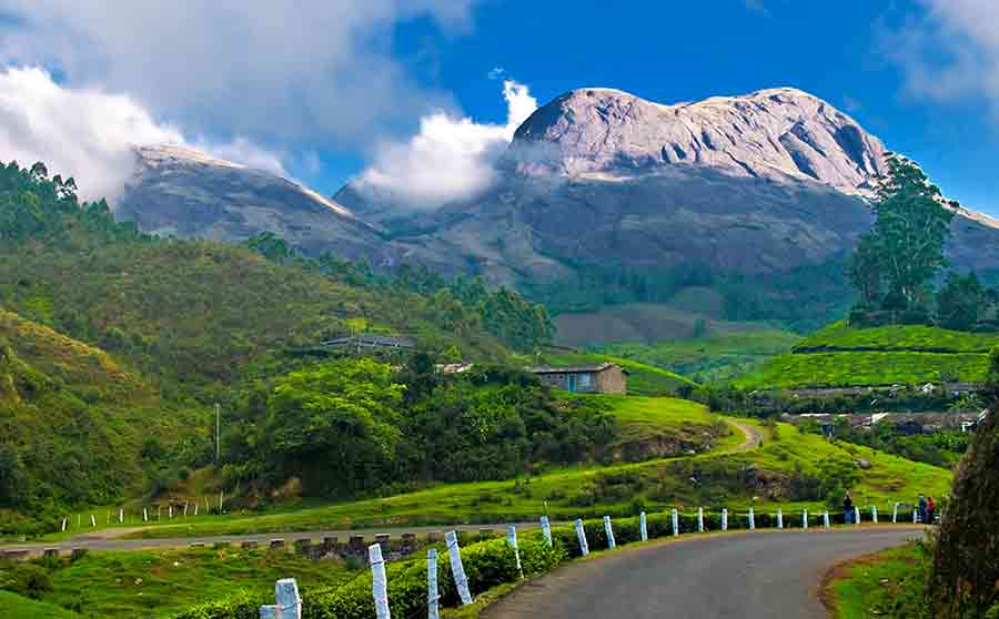 Honeymoon in Munnar Hill Station