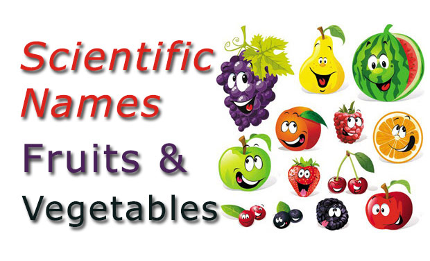 Scientific Names - Common Fruits and Vegetables - CheckAll in
