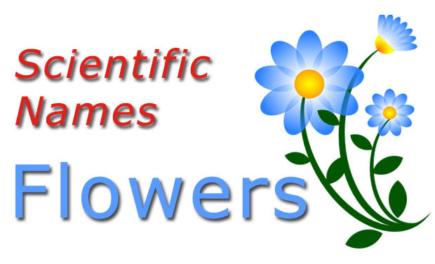 Flowers Scientific Names