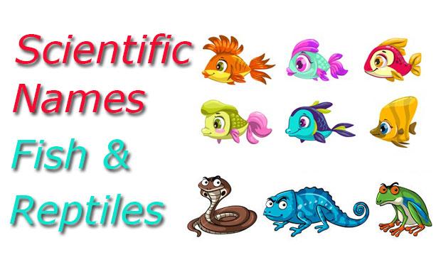 fish scientific names reptiles scientific names and amphibians scientific names