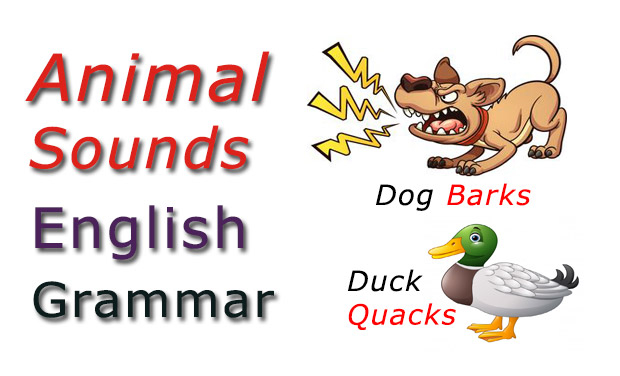 Animal sound list Learn English Grammar